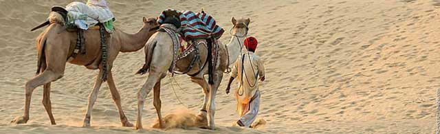 Camel Safari Tours in India - indian, luxury, unique adventure, experience, rajasthan, desert, wild, tours, travel, experiences, packages, plans, safaris, itinerary