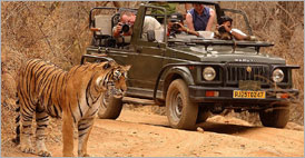 Discover Rajasthan with Tiger (17 days) | Rajasthan Holidays | Tailor Made Tours | Rajasthan Tours, Travels Packages, Plans, Rajasthan, Holidays, Tailor Made, Tours, Travels, Packages, Plans